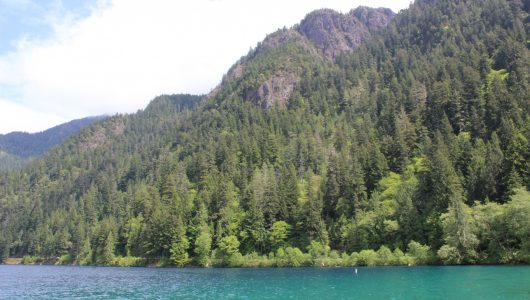 Olympic National Park, Water, Forest, Tree
